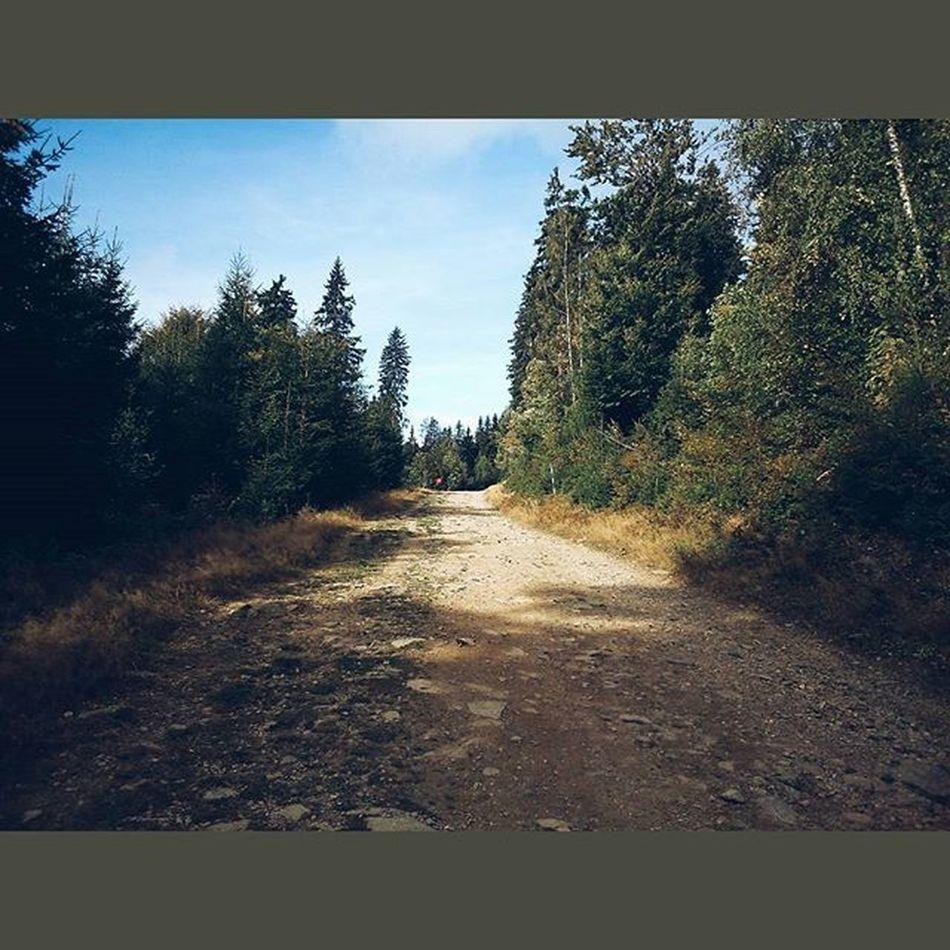Tohle mi tech 12 let chybelo 😊🌲🚶Krkonose Medvedin Mountains Nature outdoor hike hitchhiking outdoors relax czech czechrepublic vscocze vsco vscocam