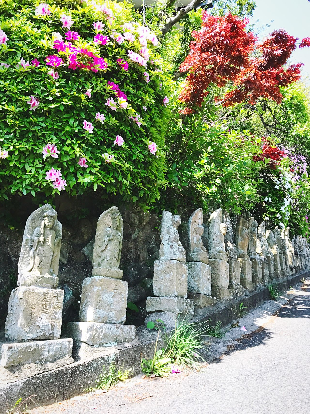 Break The Mold Flower Plant No People Day Outdoors Nature Ancient Civilization