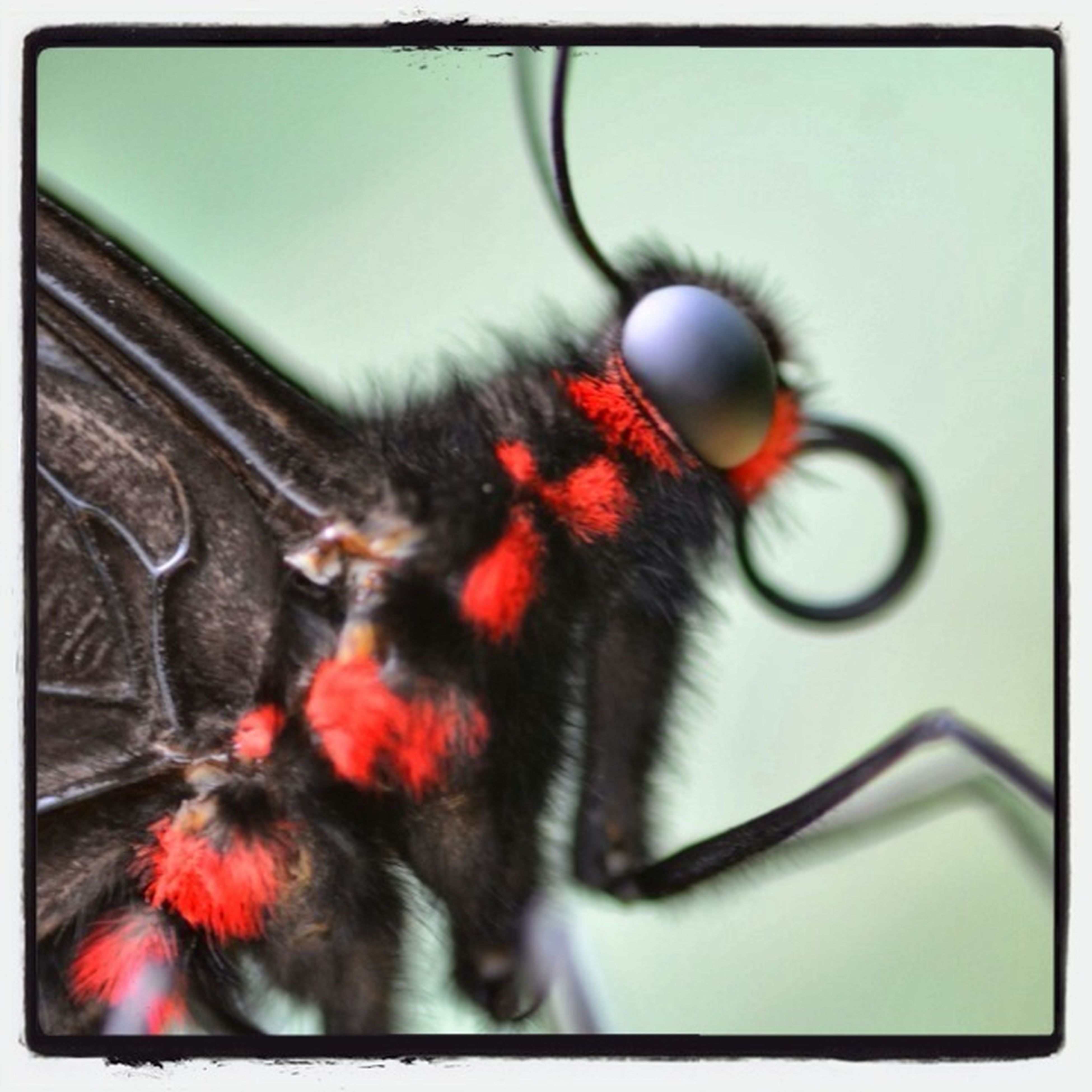 transfer print, animal themes, auto post production filter, one animal, close-up, land vehicle, transportation, insect, wildlife, mode of transport, selective focus, indoors, part of, animals in the wild, red, focus on foreground, no people, glass - material, bicycle, animal body part