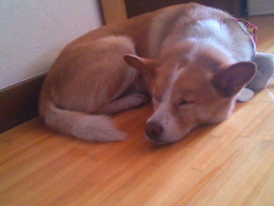 Don't Wake Me Up ... Dog Love I Love My Dog My Dog Chillin
