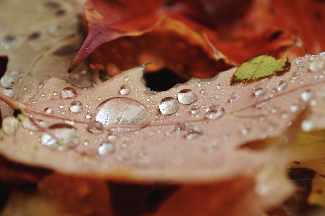 It was one of those perfect autumnal days which occur more frequently in memory than in life 💫🍂 Helloworld Naturebeauty Close-up RainDrop Rain Autumn