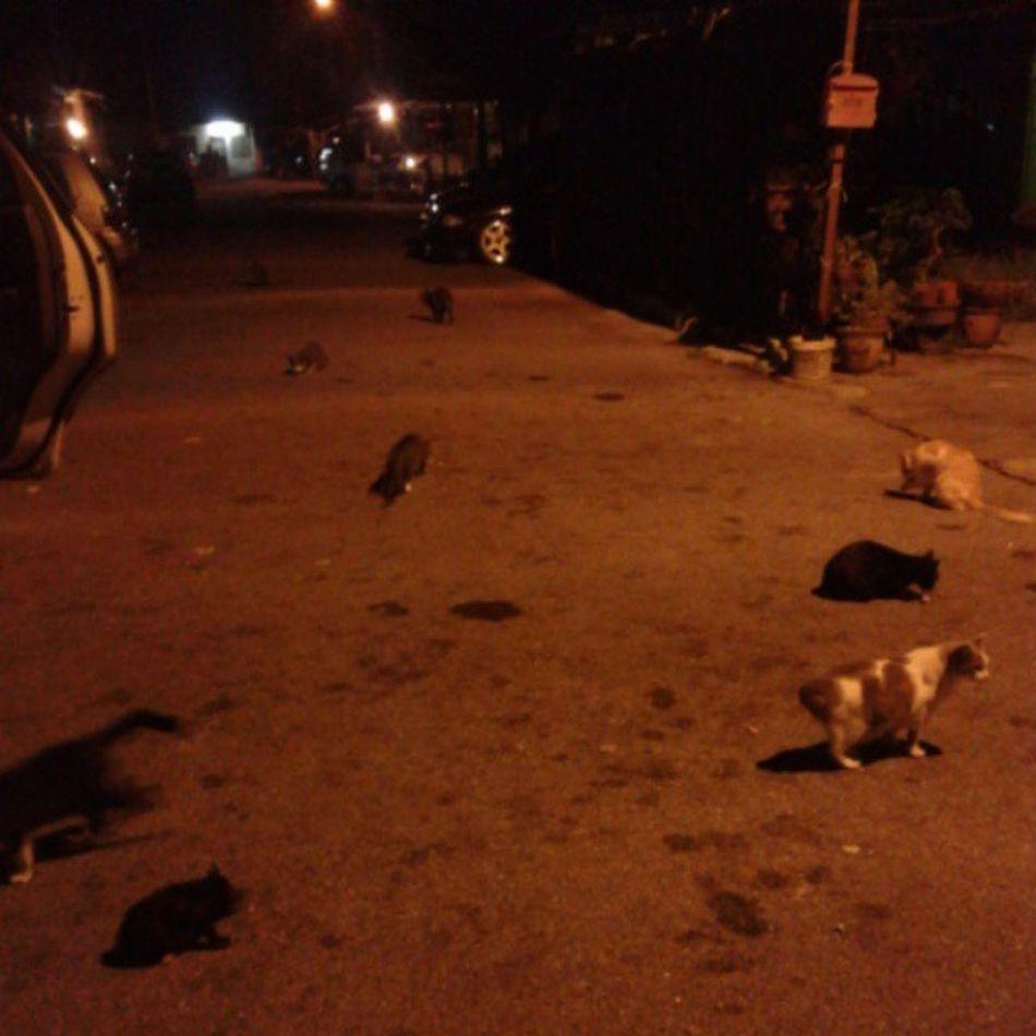 Supperforourcats Adarezekilebihnantikitamknkfc