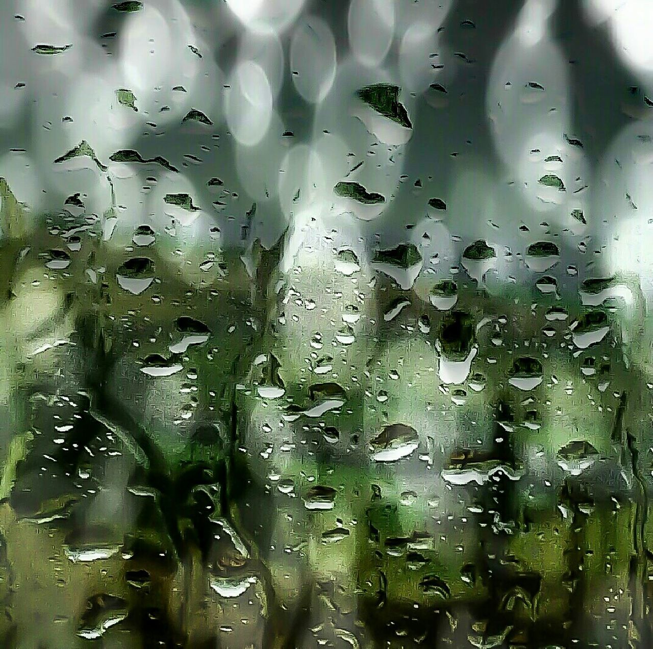 backgrounds, drop, full frame, water, green color, wet, no people, close-up, raindrop, plant, nature, freshness, day, indoors