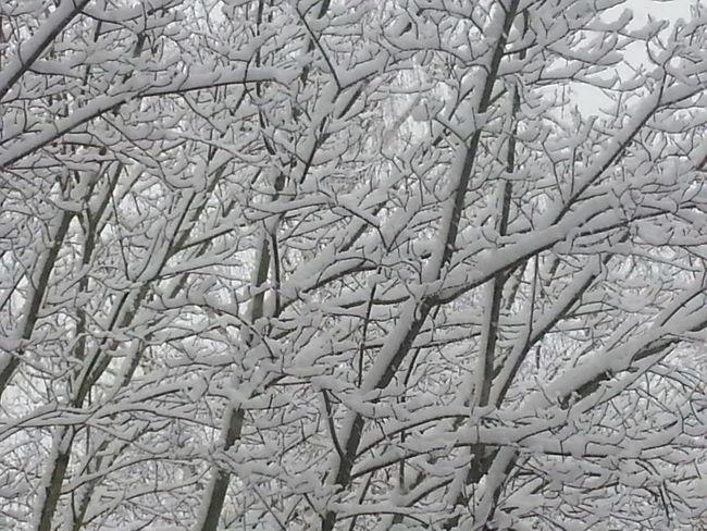 Patterns Watching Snow