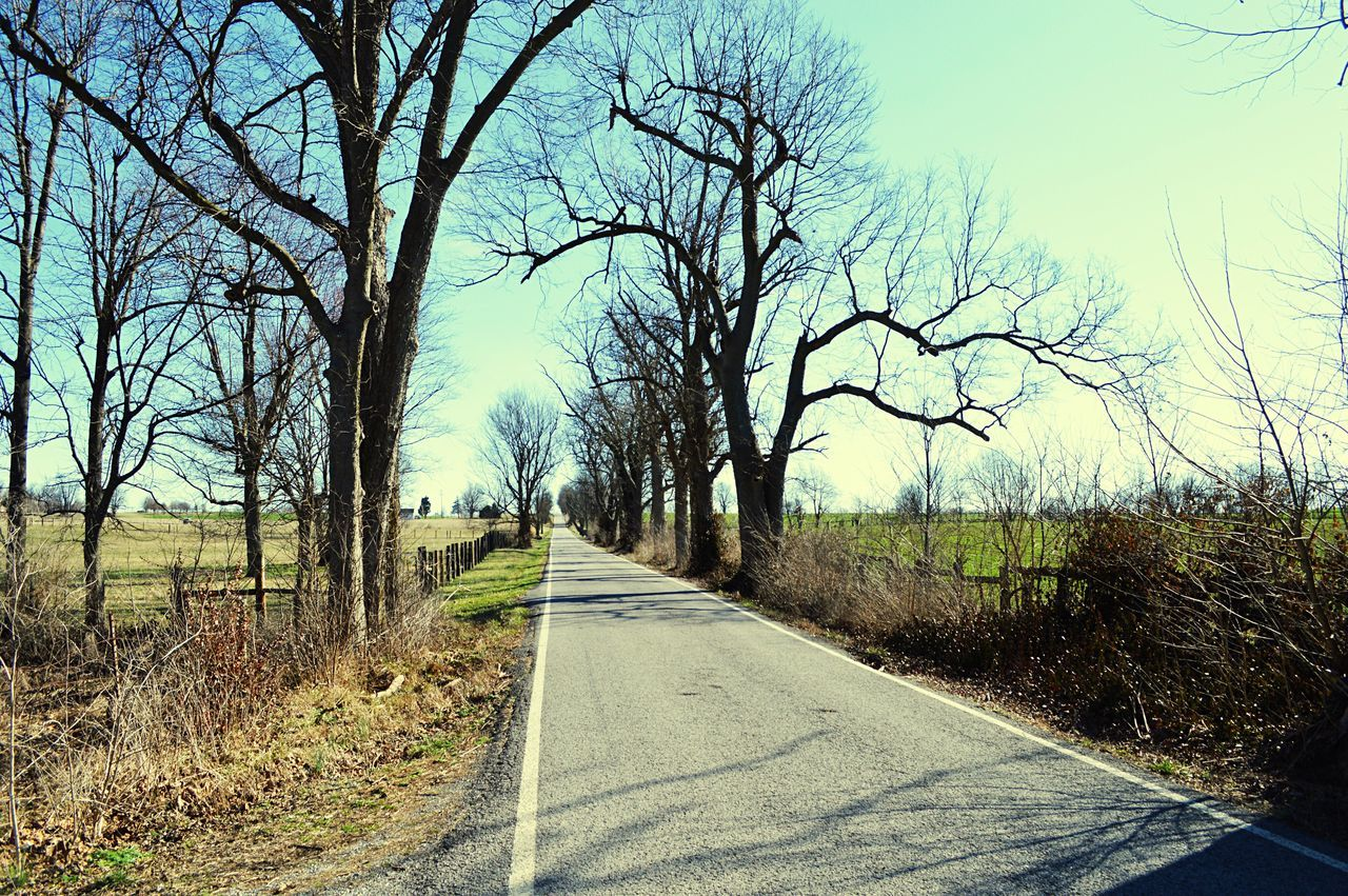 📸 Tree The Way Forward Road Nature Bare Tree Tranquility Sky No People Outdoors Transportation Day Tranquil Scene Beauty In Nature Growth Scenics Landscape Grass