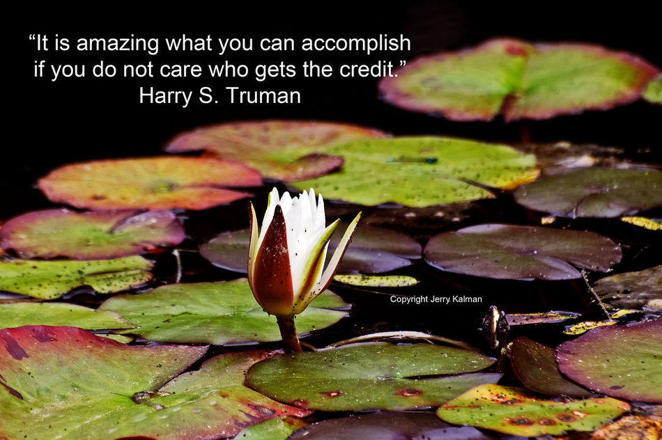 #HarryTruman #quote on anniversary of his presidential election win and picture of #lotusflower about to bloom at botanical garden near #CoosBayOR. If this #quotograph speaks to you, please share with others Botanical Coos Bay Election Harry Potter Oregon Outdoors President Water