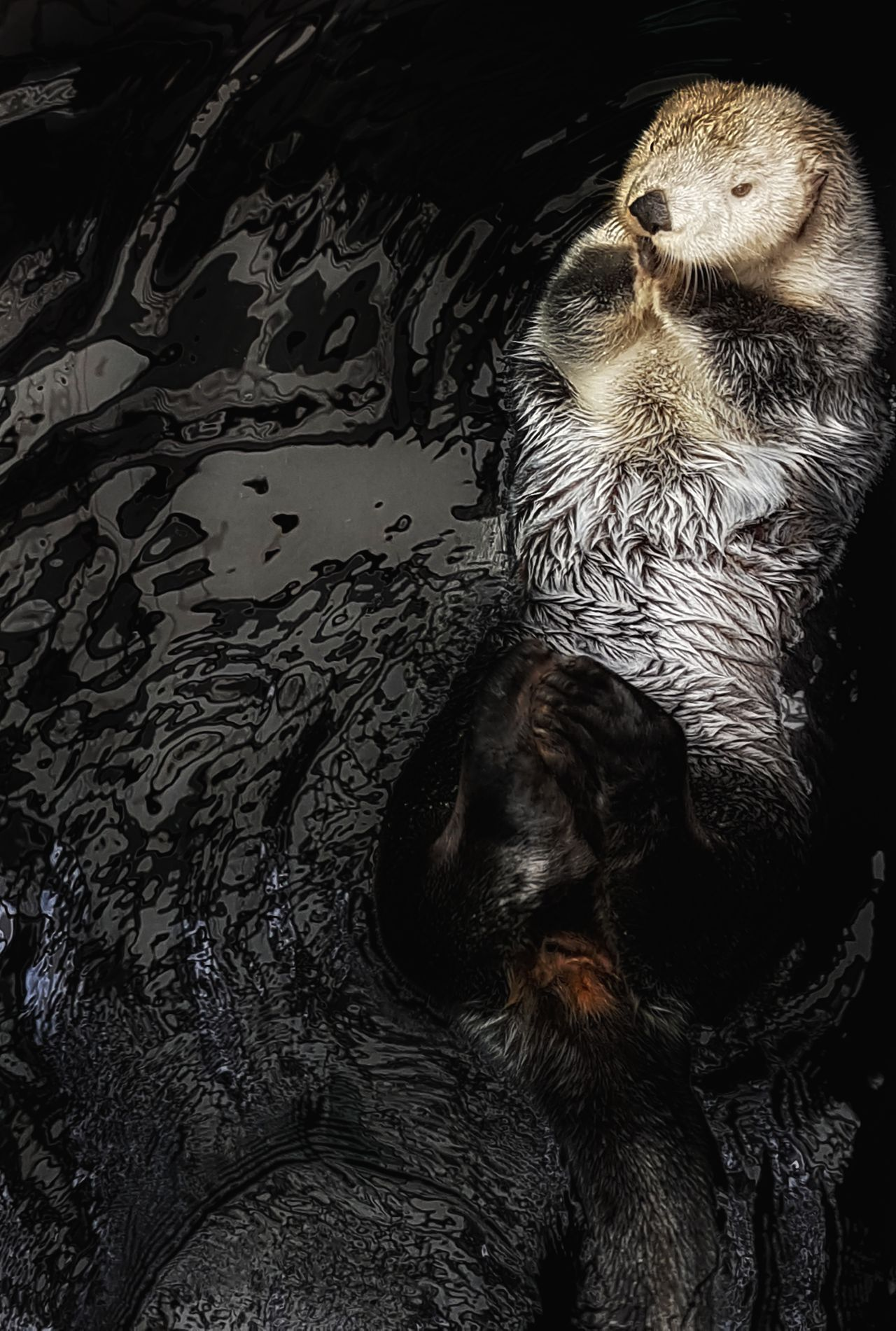 Wildlifephotography Wildlife & Nature Wildlife Scenery Animal Themes Animal Wildlife Cute Otter Otters Sea Otter Nature Water Relax Furry Close-up