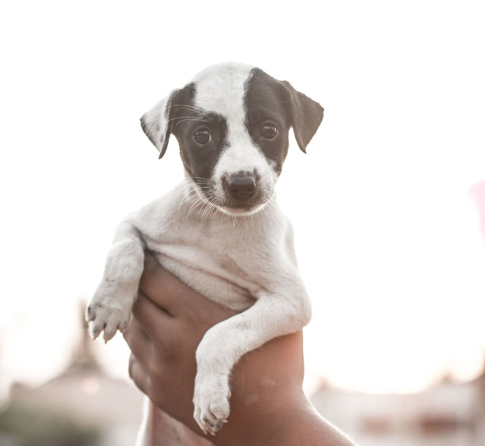 Beautiful stock photos of puppy, Animal Themes, Canine, Carnivora, Clear Sky