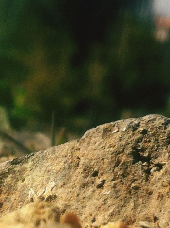 Doğa Tas Güneşli Odak Photo By  AyG