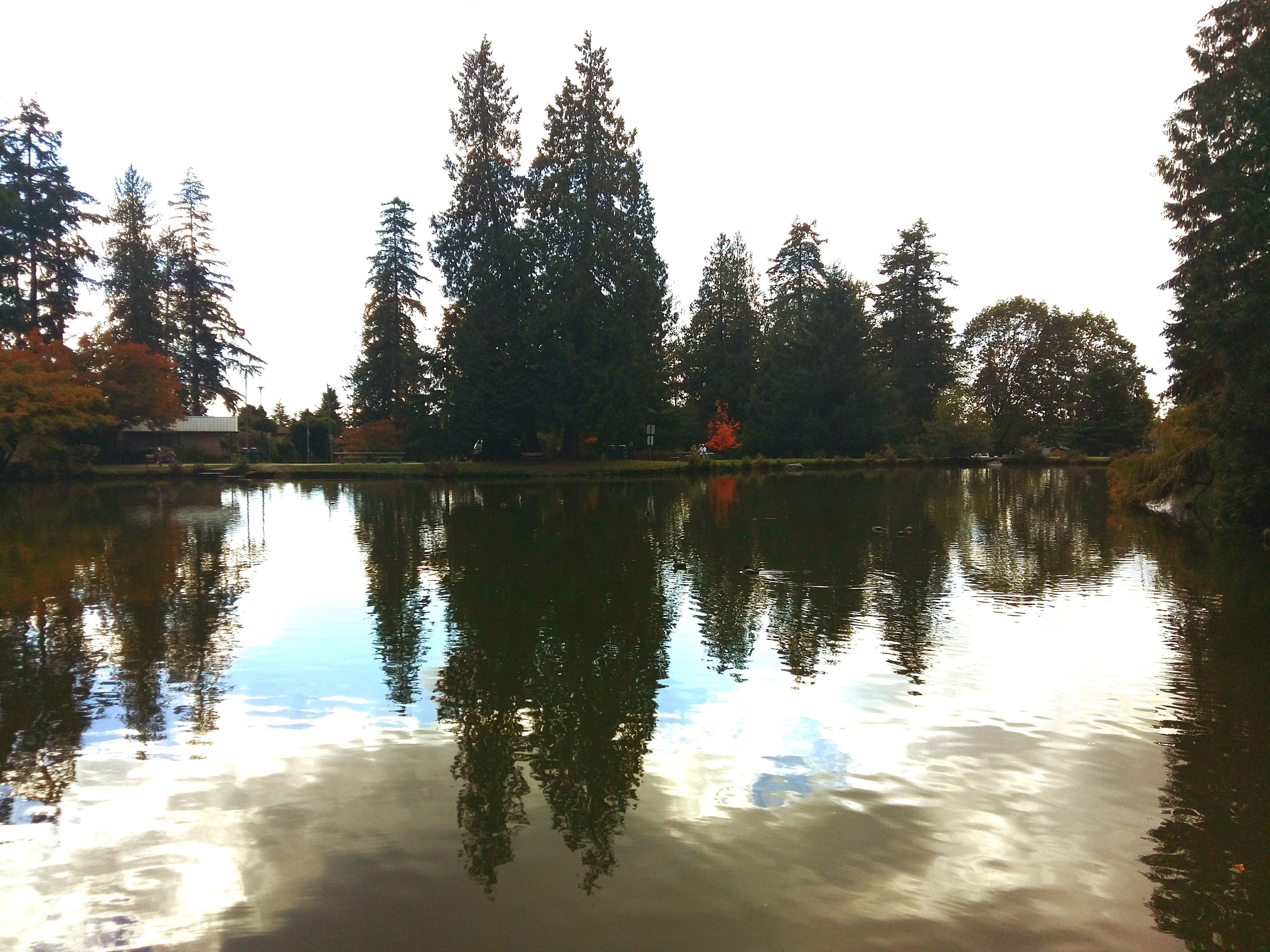 reflection, water, tree, sunset, lake, sky, nature, outdoors, no people, day, tranquility, scenics