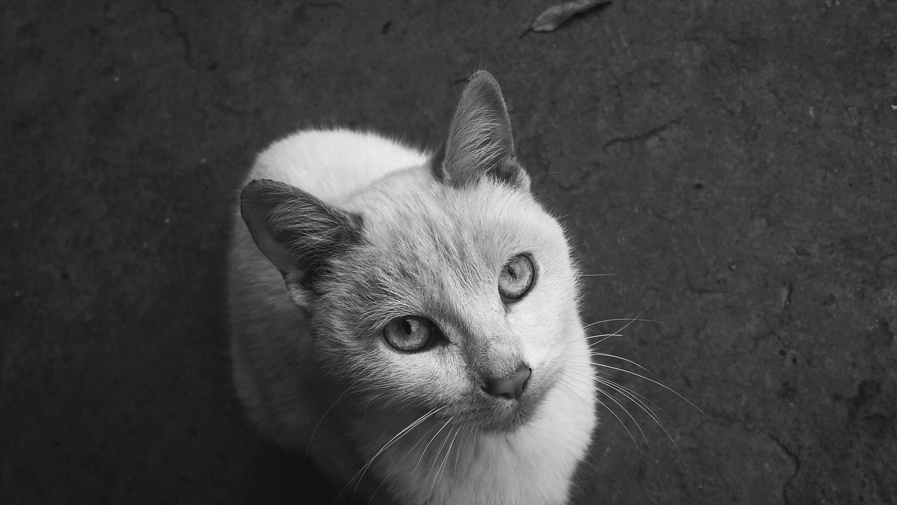 Close-up Pets Domestic Animals Feline High Angle View One Animal Animal Themes Outdoors Grayscalephotography Black And White Shadows & Lights No People Amateur Photography Selftaughtartist Day Cat White Cat Blue Eyes Nature Natural Light Photooftheday Light And Shadow