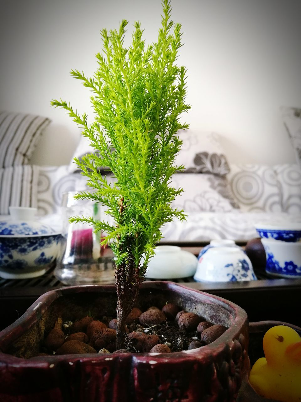 indoors, no people, close-up, growth, freshness, day, nature