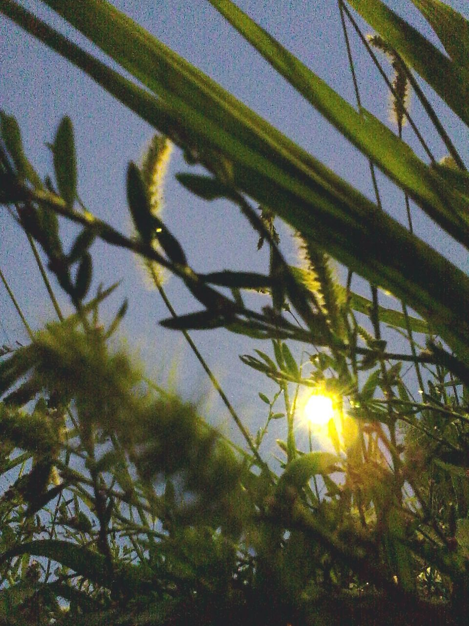 growth, sunlight, sun, lens flare, nature, no people, plant, outdoors, day, tree, leaf, beauty in nature, close-up, freshness, flower, sky