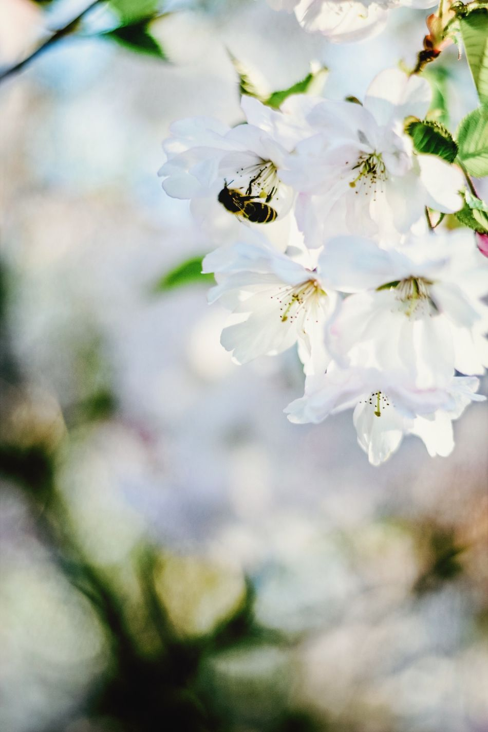Beautiful stock photos of bee, Animal Themes, Animals In The Wild, Beauty In Nature, Bee