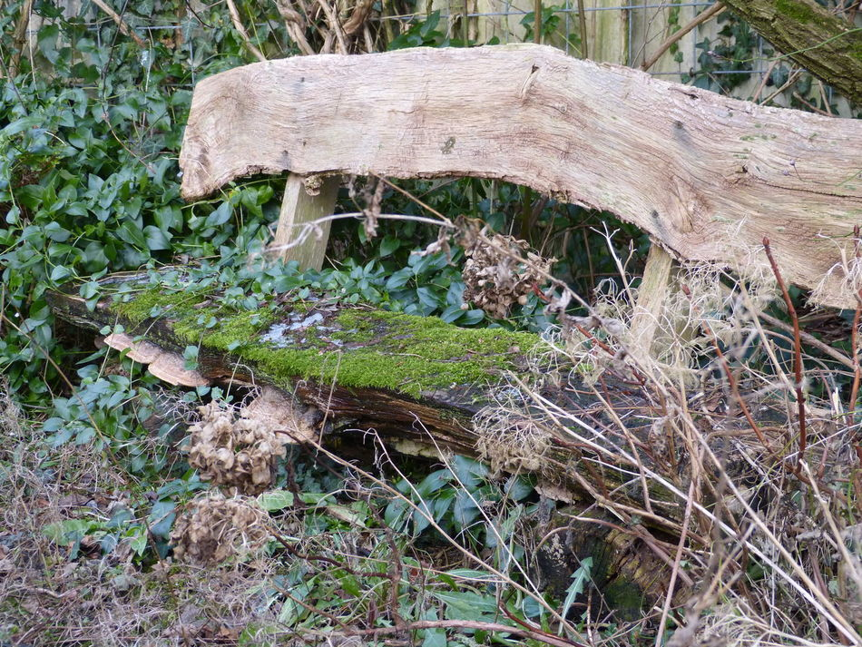 Magic garden bench ... :-) Benches Close-up Day Esoteric Place Garden Benches Gnomeworld Grass Growth Holy Place Lonely Bench Magic Moments Mossy Bench Nature Nature Art Photography Nature Bench Nature Photography Nature Place No People Outdoors Sitting Outside Tree Wild Places Witchy Wonderland Wood Benches