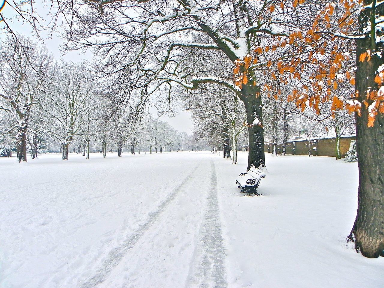Greenwich Park in the snow Beauty In Nature Cold Temperature Day Greenwich Park London Nature No People Outdoors Scenic Landscapes Snow Snow ❄ Snowing Tree Trees Winter