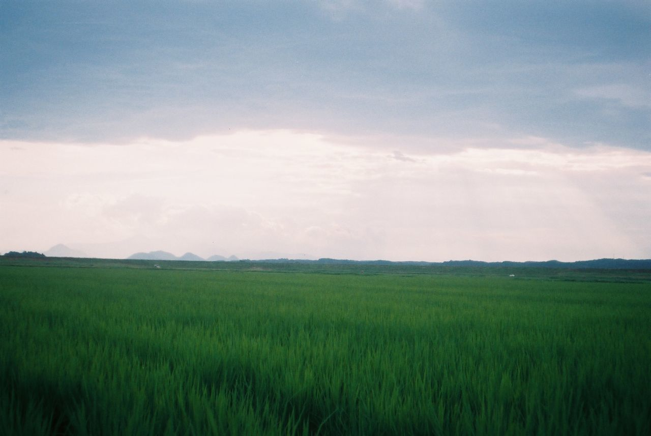 Minolta Hi-matic C で田んぼなどを試し撮り…Film フジカラー 100 Minolta Agriculture Beauty In Nature Day Field Grass Growth Landscape Nature No People Outdoors Rural Scene Sky フィルムスキャナーが要るかな…