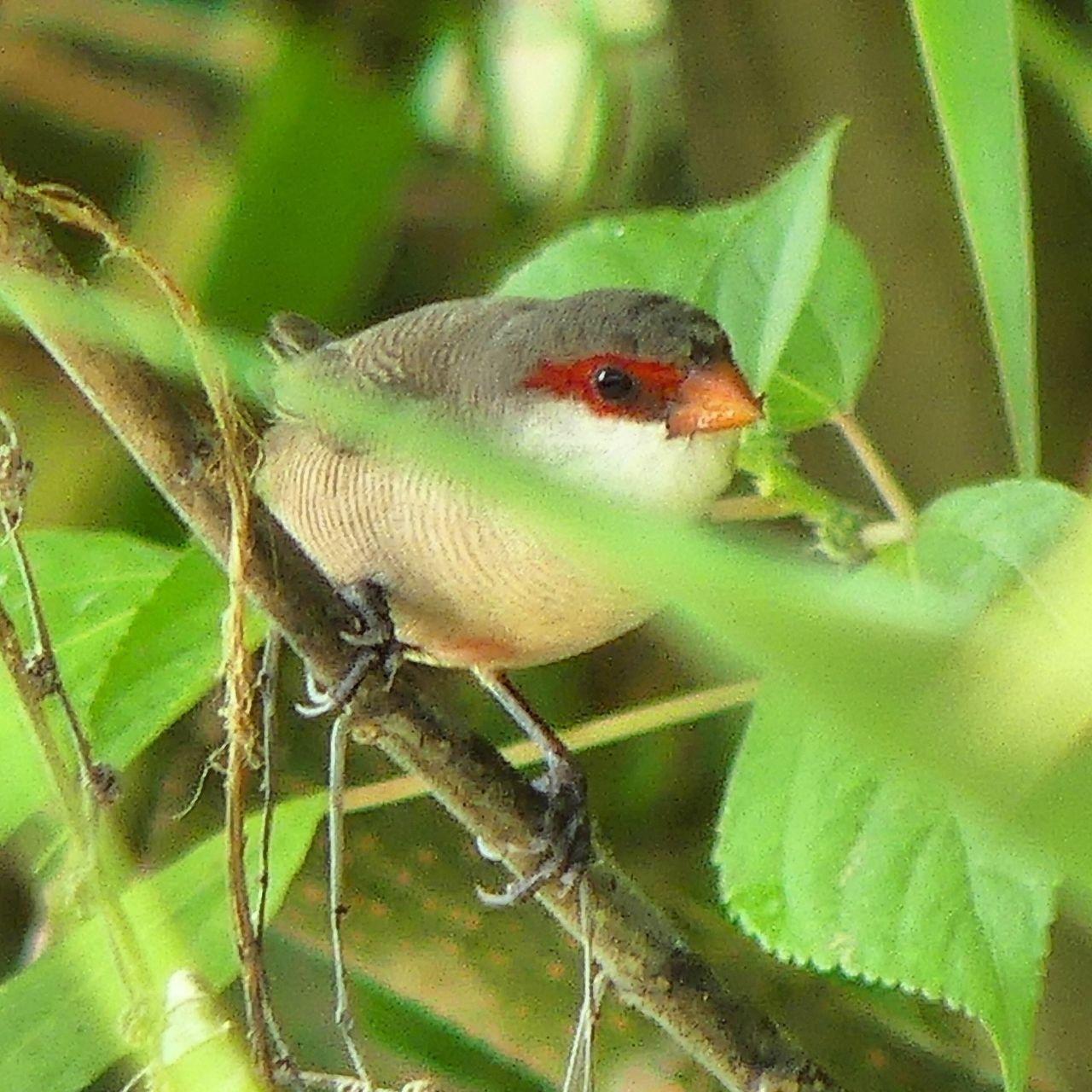 Bird Birds Bird Photography Birds_collection Birds Of EyeEm