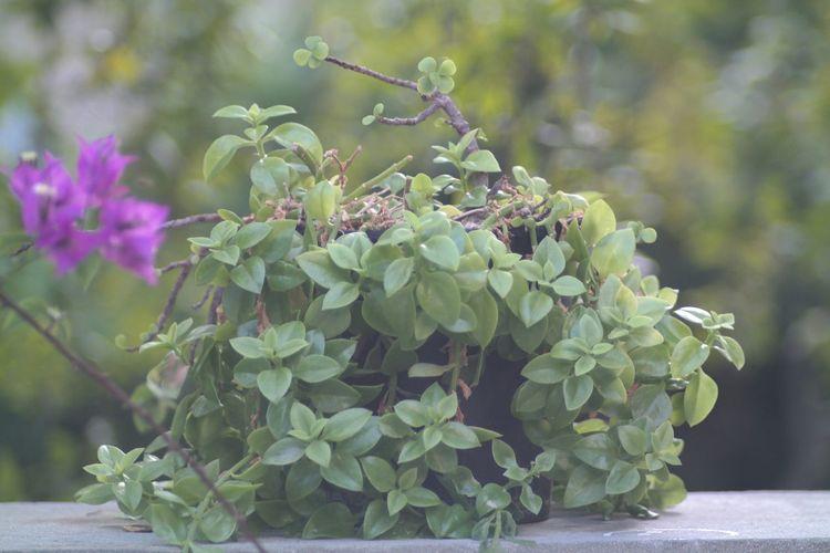 Green Nature Bokeh Flowers F2.8 Jupiter37a NX2000