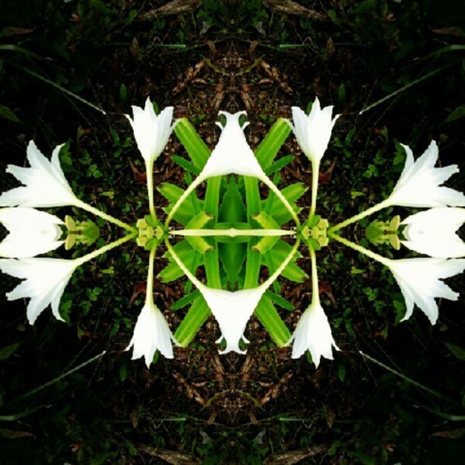 #filthysymmetry_flowers Filthysymmetry_flowers