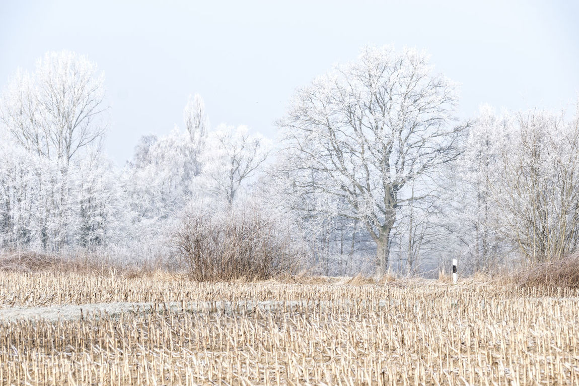 Winter field Agriculture Animal Themes Bare Tree Day Grass Landscape Nature No People Outdoors Rural Scene Sky Tree Winter Field