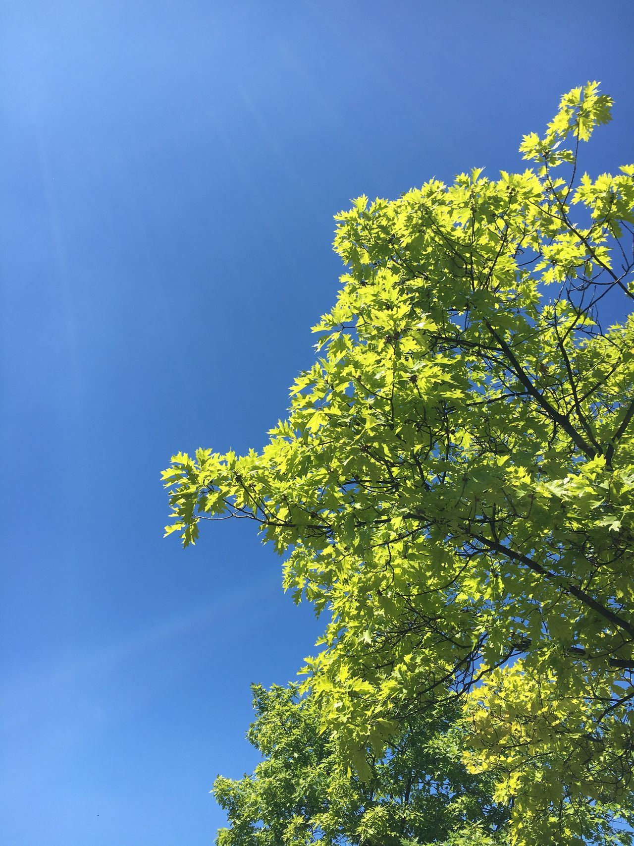 Growth Low Angle View Tree Nature Blue Beauty In Nature Clear Sky No People Day Branch Green Color Outdoors Freshness Fragility Flower Leaf Sky Close-up