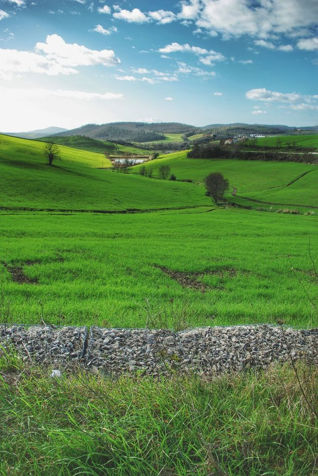 Landscape Layers Layers Landscape Landscapes With WhiteWall Green Greenfields Bare Trees Pond Road Hillside Hills Early_spring