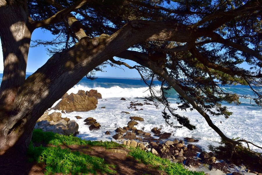 Tree Beauty In Nature Branch Outdoors Scenics Tranquility No People Water Day Monterey Coastline Coastline Landscape