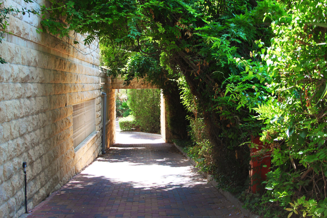 Absence Alley Architecture Built Structure Day Diminishing Perspective Empty Footpath Green Color Growth Leading Long Narrow Nature No People Outdoors Pathway Plant Sunlight The Way Forward Tree Vanishing Point Walkway