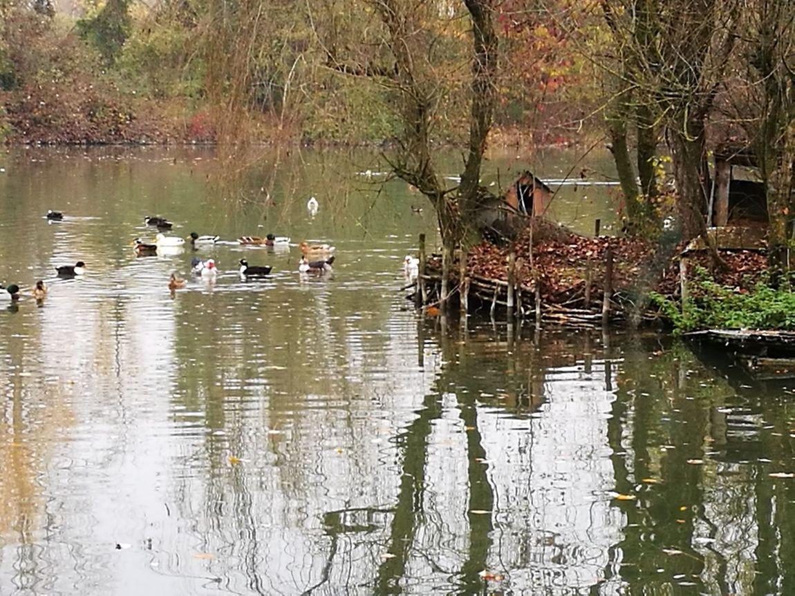 Lake Nature Bird