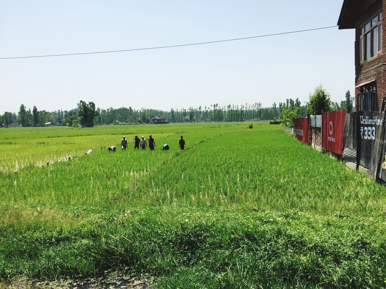Farmers Field Miles Away Outdoors Sky Riceplantation House Wires Summer Day People Landscape Eye4photography  ShotOniPhone6 Kashmir , India Kashmirdiaries Kashmirphotographers The Great Outdoors - 2017 EyeEm Awards