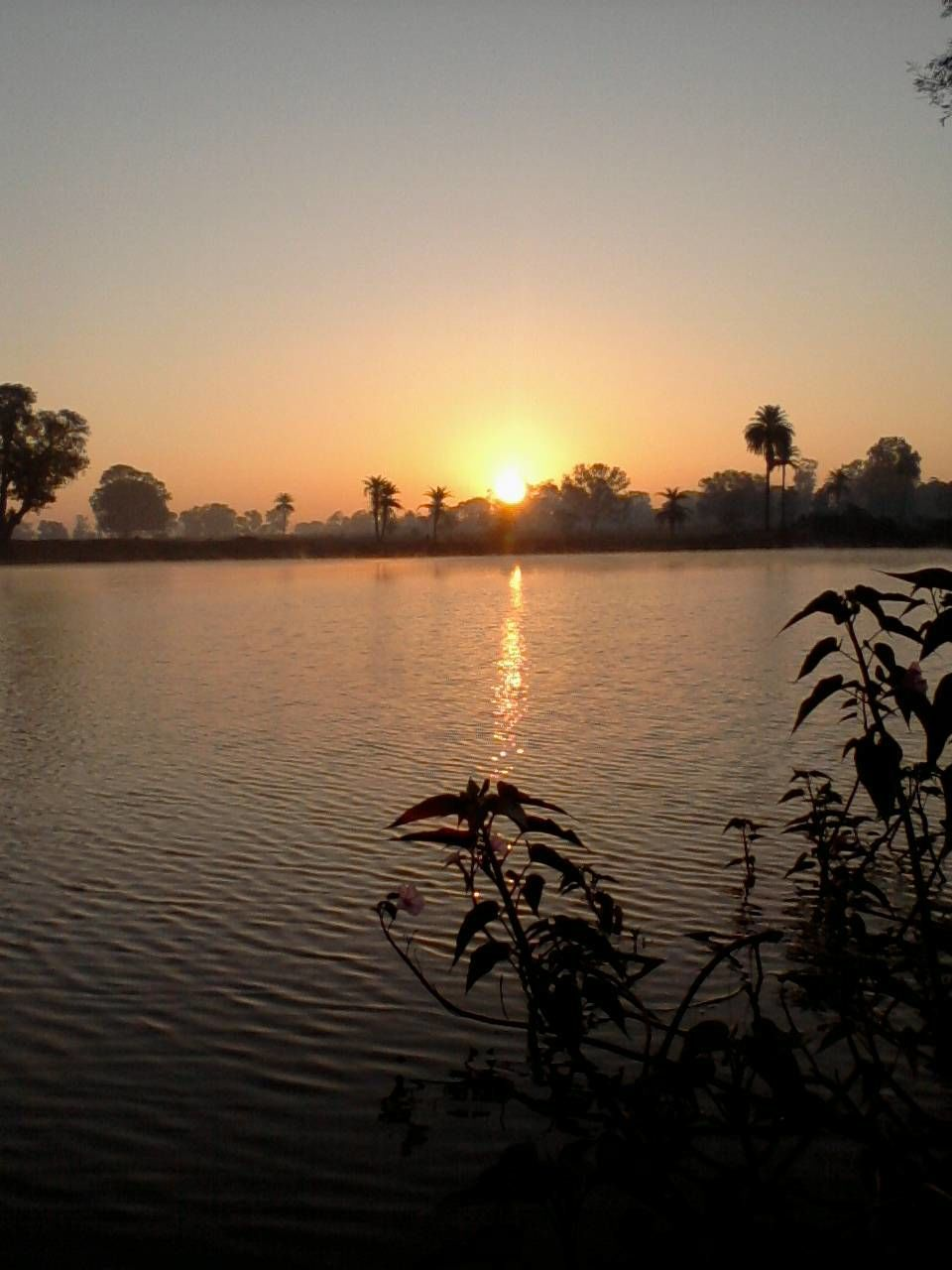 sunset, water, lake, nature, tranquil scene, tree, reflection, scenics, tranquility, beauty in nature, silhouette, outdoors, no people, sky, sun, sunlight, plant, clear sky, day