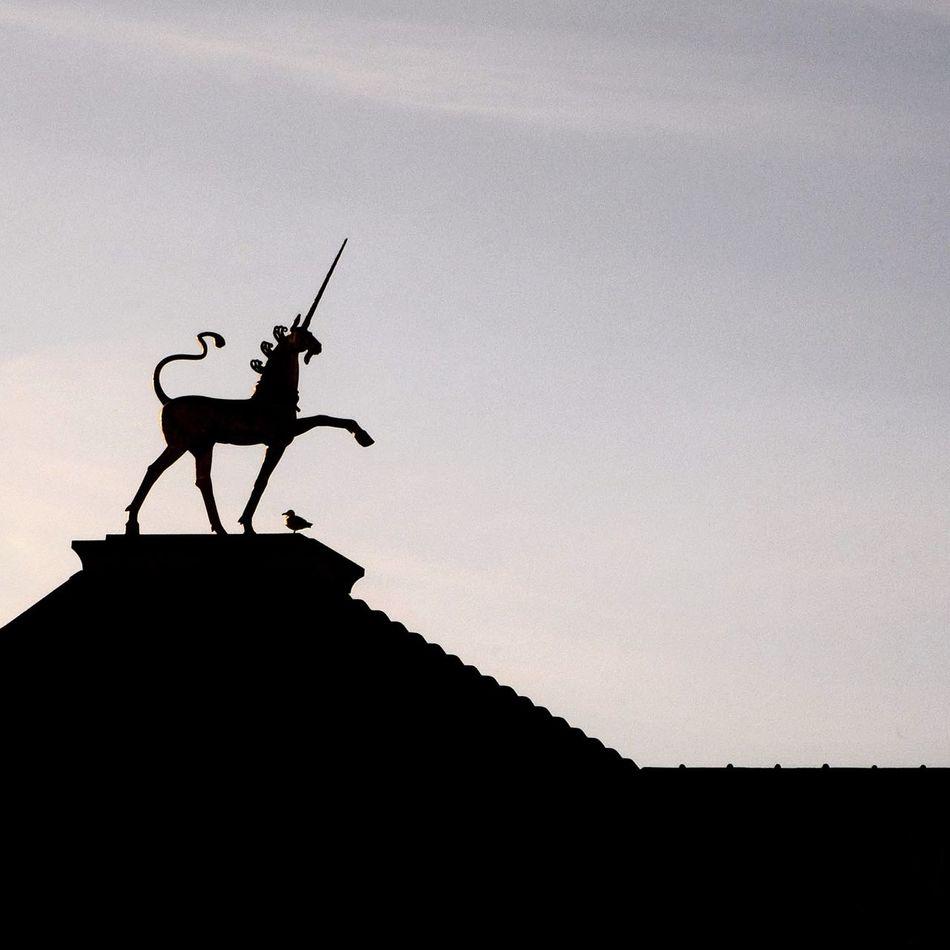 Beautiful stock photos of unicorn, Animal Representation, Animal Themes, Animals In The Wild, Architecture