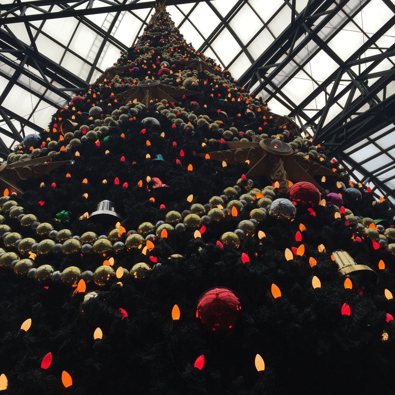 Disneyland Christmas Tree 12.14.