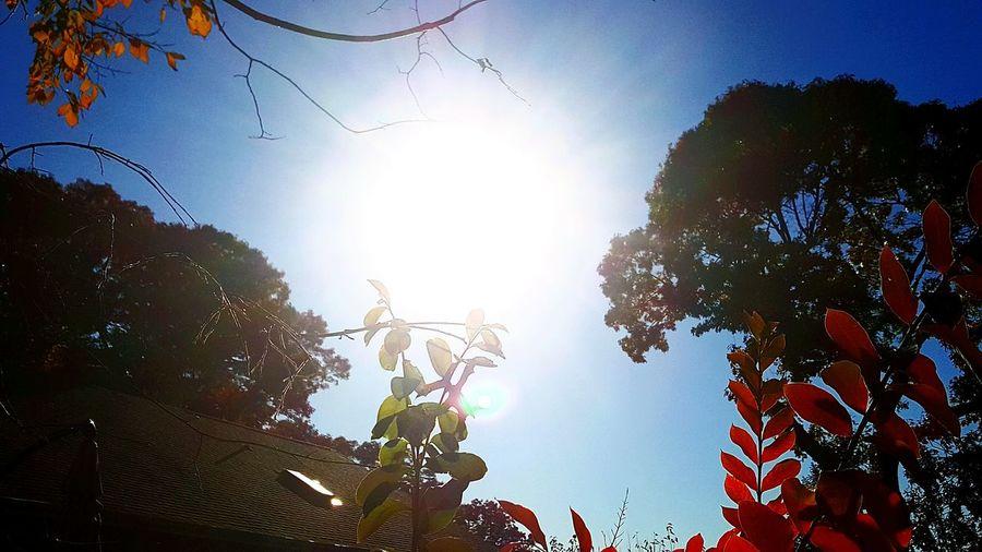 WeatherPro: Your Perfect Weather Shot Sunshine Sun Light Through Trees Colorful Trees Autumn🍁🍁🍁 Autumn Leaves Autumn Trees Autumn Colors Autumn Collection Huntington Ny