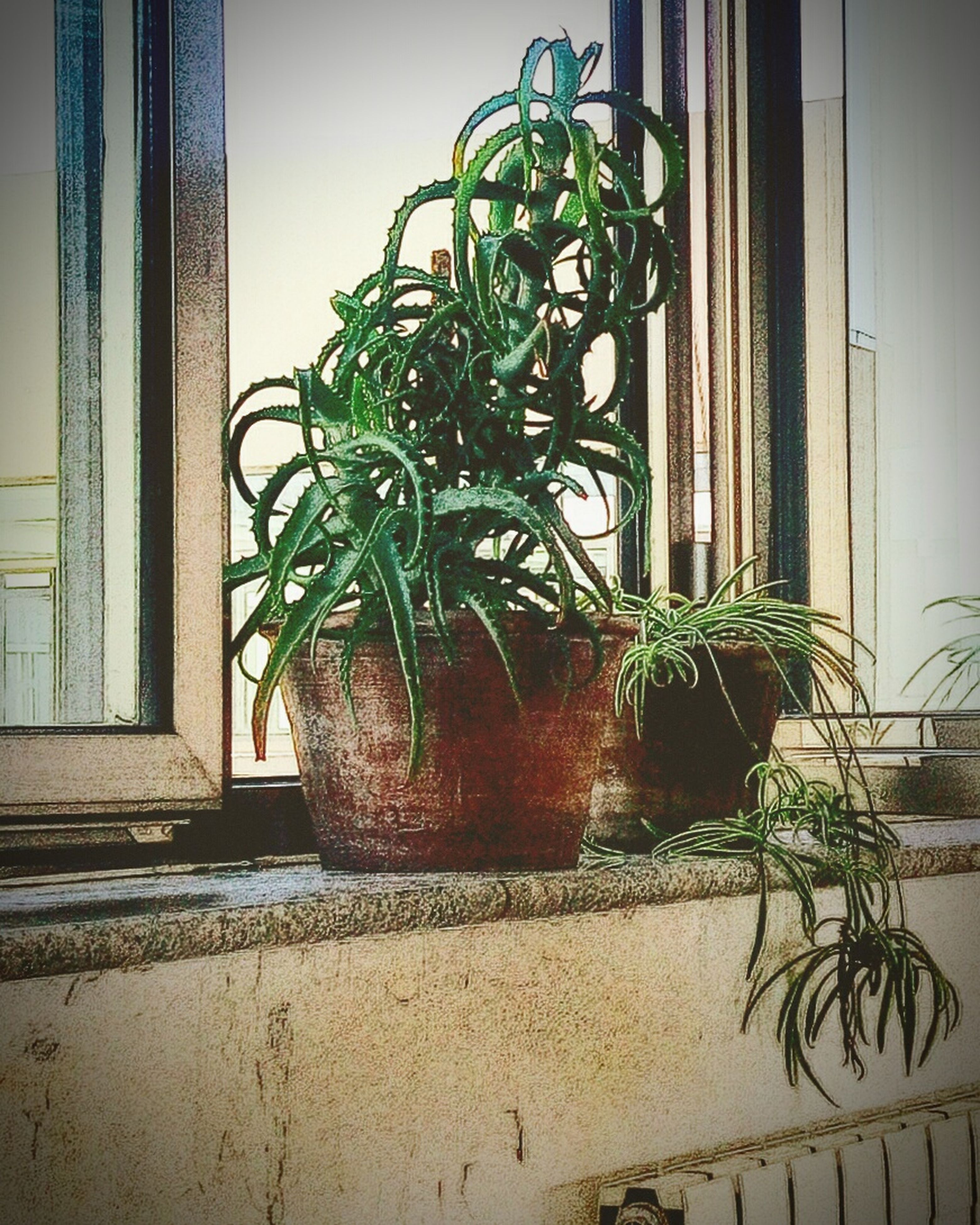 potted plant, plant, built structure, window, architecture, indoors, growth, house, wall - building feature, leaf, green color, building exterior, home interior, wall, flower pot, pot plant, window sill, sunlight, door, no people