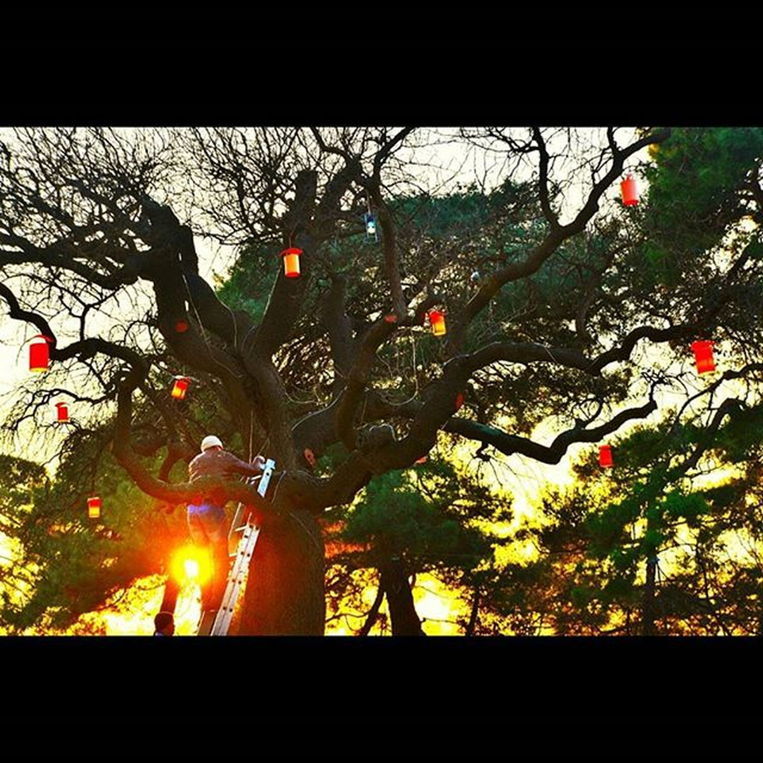 tree, transfer print, growth, branch, silhouette, auto post production filter, sunlight, nature, plant, sunset, no people, outdoors, fence, red, sky, close-up, park - man made space, orange color, low angle view, day