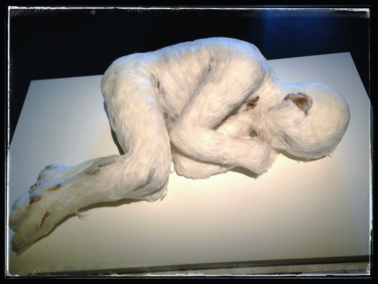 "The ""birdboy"" by Lucy Glendinning! :)) Art ArtWork Eye4photography  Fantastic Exhibition"