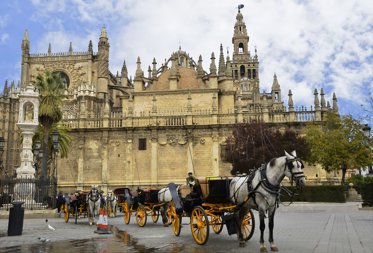 Andalucía Andalusia Animal Themes Architecture Building Exterior Built Structure Cathedral City EyeEm Gallery Giralda Horse Horse Cart Outdoors Sevilla Seville Sky SPAIN Square Working Animal Spain ✈️🇪🇸 Spaın