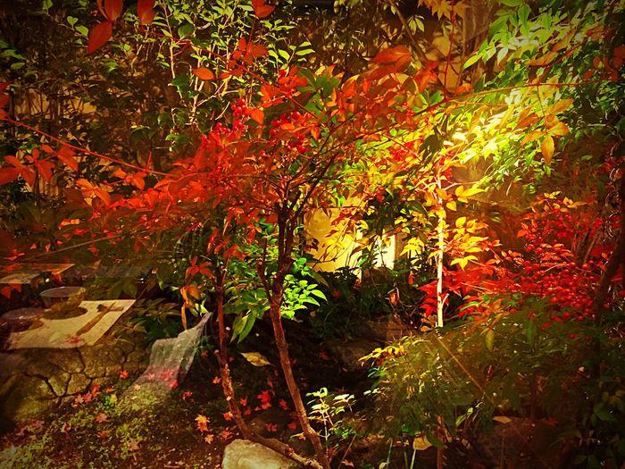 Japan Osaka,Japan Sakai Sakai-shi,Japan Umenohana Reaf