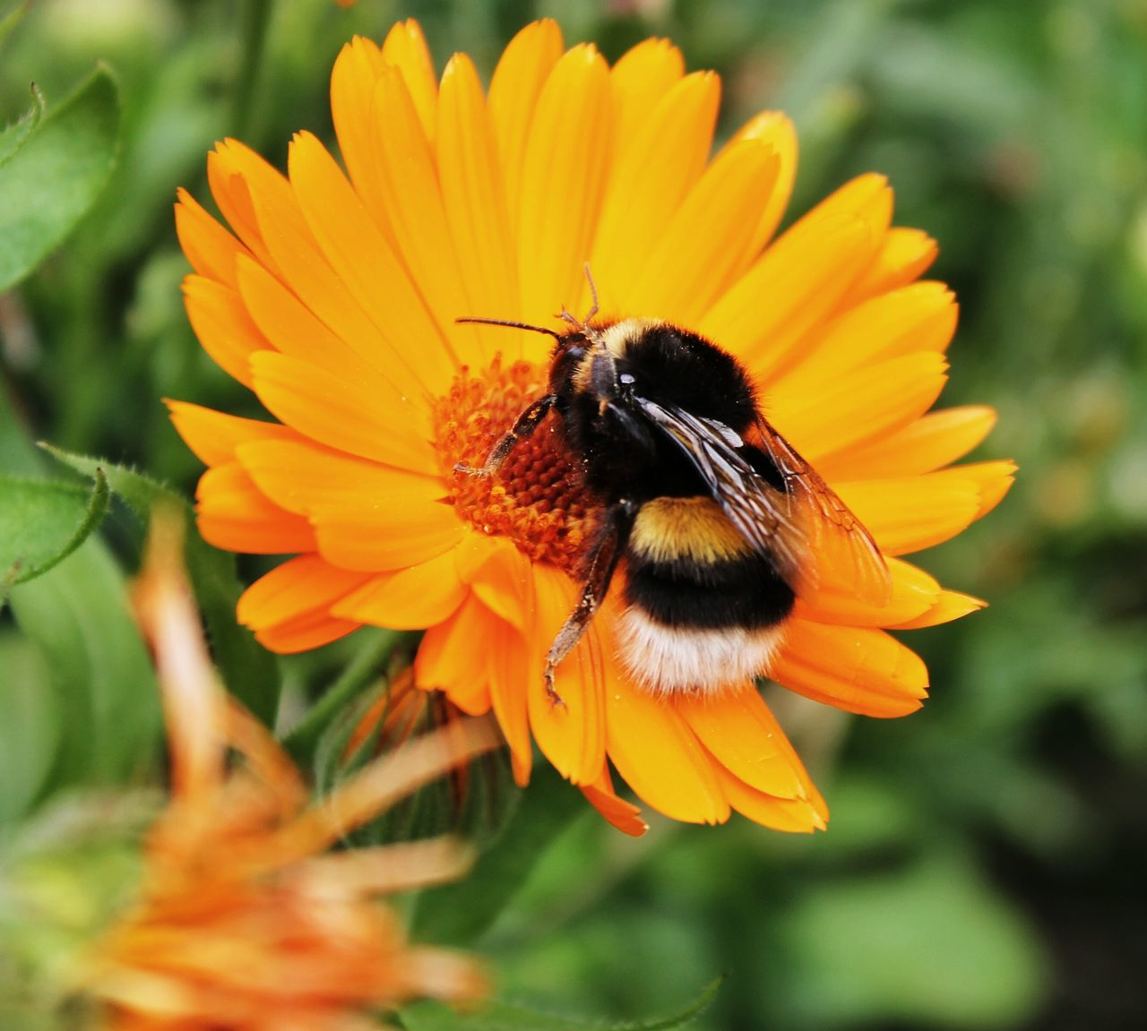 Beautiful stock photos of bee, Animal Themes, Animals In The Wild, Beauty In Nature, Close-Up