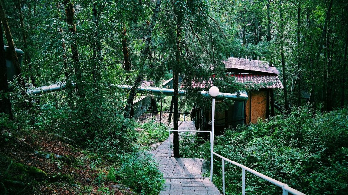 Wandering about through the abandoned camp Wandering Around Aimlessly Photography Nature Nature Photography Green Nature Abandoned Camp EyeEm Nature Lover EyeEm Gallery Taking Photos Kazakhstan Qarqaraly In The Forest VSCO Stairs Karkaralinsk Forest Park