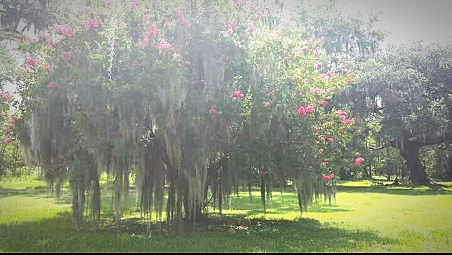 Glitch Exploring Beautiful Nature Treescape