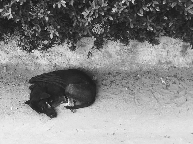 Animal Themes Animals In The Wild Mammal One Animal Day High Angle View No People Nature Outdoors Domestic Animals Dog BlackDog Sleeping Lonely Cool Wing Canfly Beauty In Nature Devildog