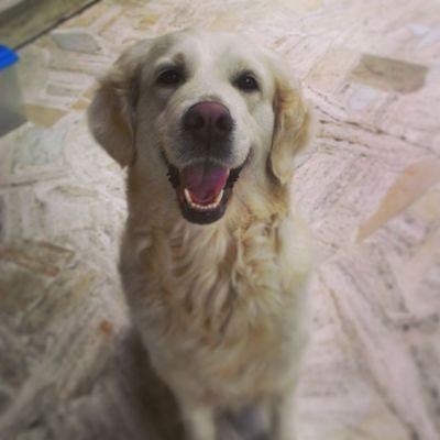 Dog Dogstagram
