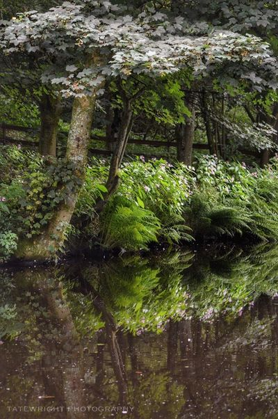 Uppermill Saddleworth Landscape_Collection Landscape_photography Reflections In The Water Reflection_collection