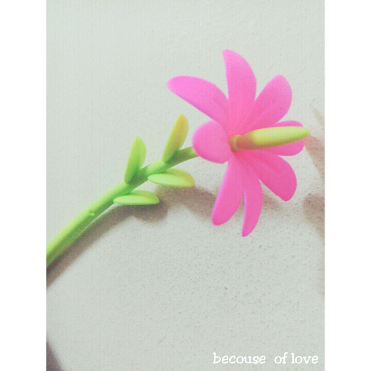 More than flower!!!