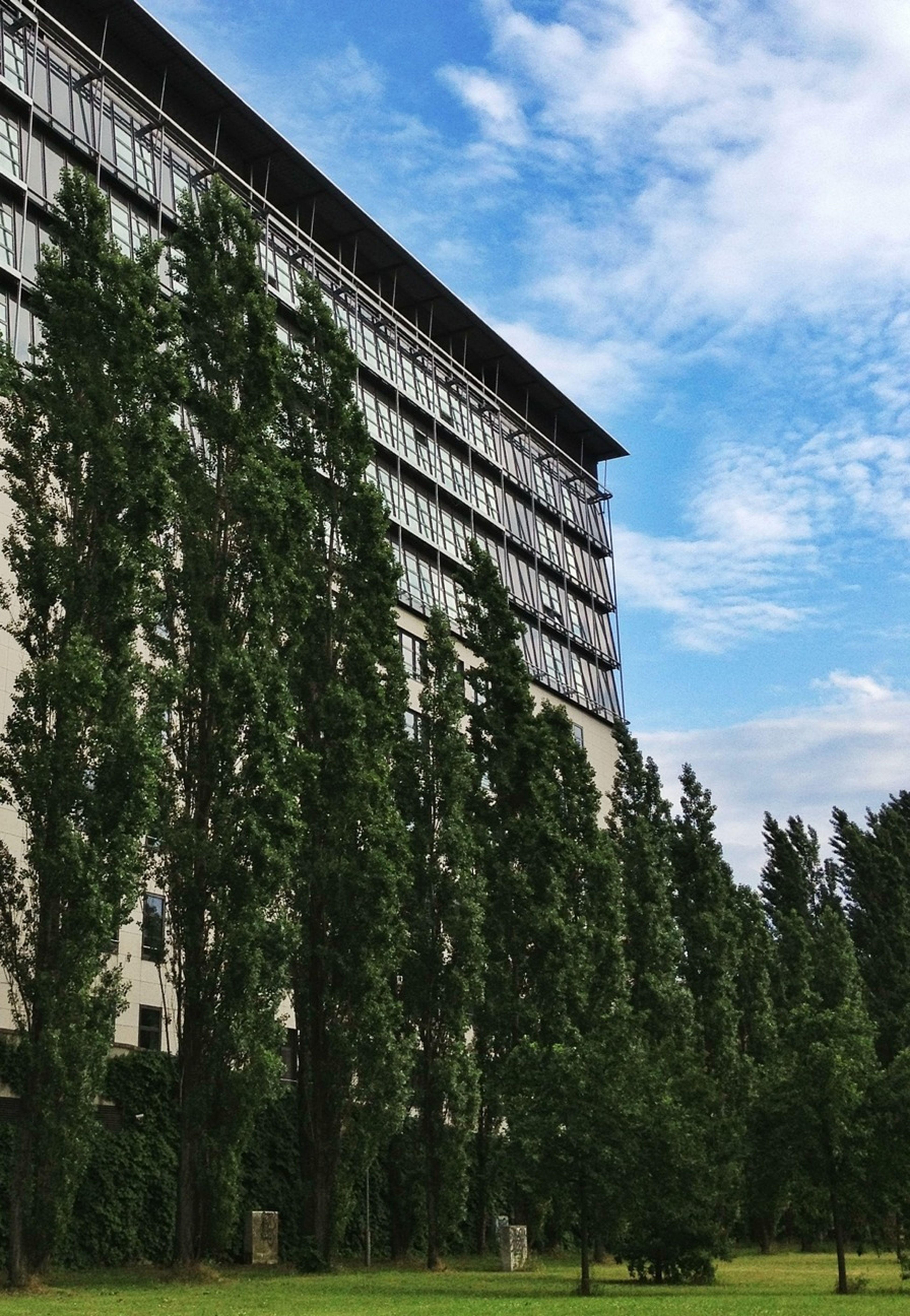 Buildingsandtrees