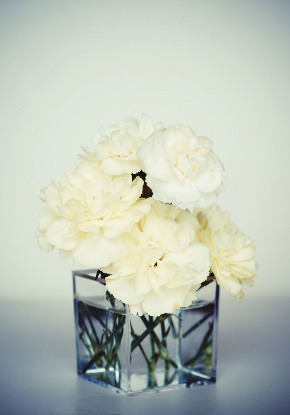 Beautiful stock photos of glass, Beauty In Nature, Flower, Fragility, Freshness