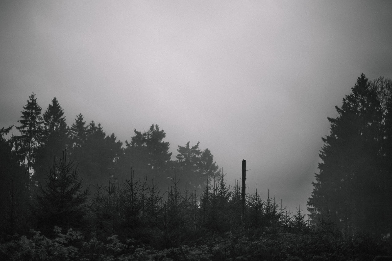 moody autumn day Autumn Autumn Collection Beauty In Nature Black & White Black And White Black And White Photography Black&white Blackandwhite Dark Fall Fog Foggy Foggy Weather Forest Great Views Grey Mood Moody Nature Outdoors Silhouette Sky Tree Weather